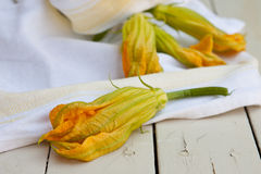 Zucchini flowers Royalty Free Stock Photos