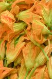 Zucchini flowers background Stock Images