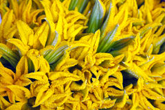Zucchini flowers on the counter Royalty Free Stock Image