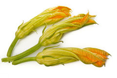 Zucchini flowers isolated. Three zucchini flowers isolated top view Royalty Free Stock Photography