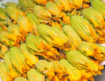 Zucchini flowers Royalty Free Stock Images