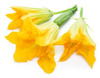 Zucchini flowers on a white. Stock Photo