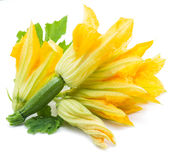 Zucchini flowers on a white. Royalty Free Stock Images