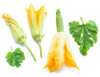 Zucchini flowers on a white. Stock Image