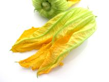 Zucchini flowers on white background Royalty Free Stock Image