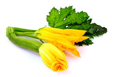 Zucchini Flowers on a White Background Stock Photography