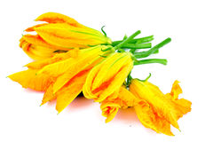 Zucchini Flowers on a White Background Royalty Free Stock Images
