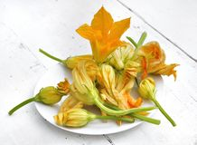 Zucchini flowers Royalty Free Stock Image