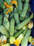 Zucchini freschi Fotografie Stock Libere da Diritti