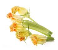 Zucchini fruit Stock Image