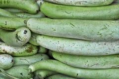 Zucchini gialli freschi Fotografia Stock Libera da Diritti