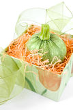 Zucchini gift Royalty Free Stock Photo