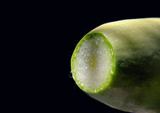 Zucchini i ett snitt på en svart bakgrund Royaltyfria Foton