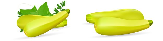 Zucchini isolated on background. Squash whole. Fresh vegetable marrow isolated. Oblong, green squash. Vegetable marrow. Courgette or zucchini. Harvest courgette stock illustration