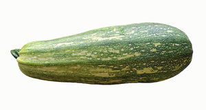 Zucchini. An isolated image of large green zucchini Stock Image