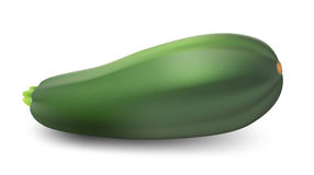 Zucchini isolated on white background. Stock Photos
