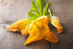 Zucchini kwiat Obrazy Stock