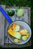 Zucchini kwitnie w chochli Obrazy Stock