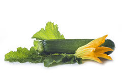 Zucchini with leaves and flowers Royalty Free Stock Image
