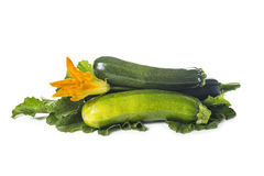 Zucchini with leaves and flowers Stock Photo