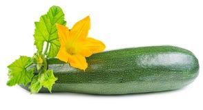 Zucchini mit Blume Lizenzfreie Stockfotos