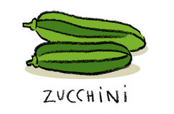 Zucchini. A pair of zucchini, simple illustration, isolated Stock Image