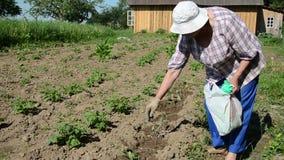 Zucchini plant fertilizer stock footage