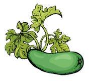 zucchini rysuje tła trawy kwiecistego wektora Zdjęcie Royalty Free