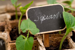 Zucchini sprouts with chalkboard label Stock Photos