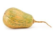 Zucchini squash Royaltyfria Bilder