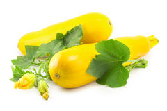 Zucchini squash Arkivfoto