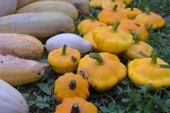 Zucchini and squash Royalty Free Stock Photo
