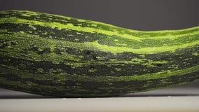 Zucchini squash footage. Sliding camera movement stock video footage