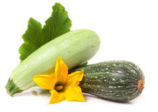 Zucchini and squash with leaf  flower isolated on white background Stock Photos