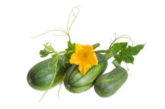 Zucchini and stalk with leaves, tendrils and flower. Three fresh zucchini and stalk with leaves, tendrils and flower on a light background Stock Images