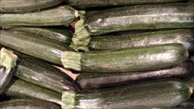 Zucchini texture. In the garden stock footage
