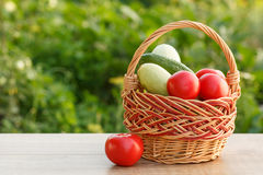 Zucchini, tomatoes and cucumber in a wicker basket on natural gr Royalty Free Stock Photo