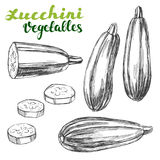Zucchini vegetable set hand drawn vector illustration realistic sketch Stock Images