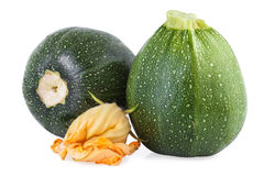 Zucchini vegetables Stock Image