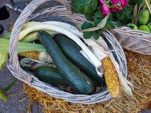 Zucchini verde fresco fotografia de stock