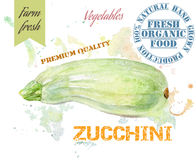 Zucchini watercolor banner Stock Photography