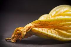 Zucchiniblüte Lizenzfreies Stockbild