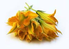 Zucchiniblumen Stockfotos