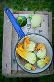 Zucchiniblumen im Schöpflöffel Stockfotos