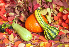 Zucchinis in autumn Royalty Free Stock Images
