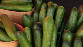Zucchinis 1 stock video footage