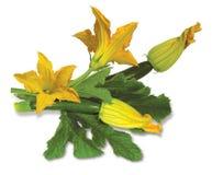 Zucchinisammansättning Fotografering för Bildbyråer