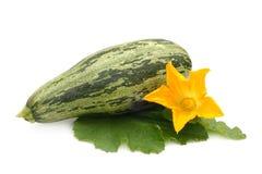 Zucchino della verdura fresca con il foglio ed il fiore Immagini Stock