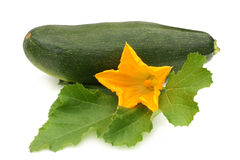 Zucchino della verdura fresca con il foglio ed il fiore Immagine Stock