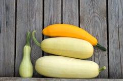 Zucchiny!. Marrow, marrows, squash, gourds, vegetable, potherb, harvest, crop, fresh, kailyard, fertility, fecundity, prolific, fruitful, fertile, fecund, food Stock Photos